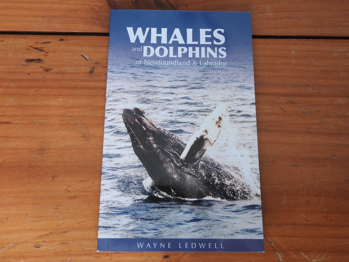 Cover, Whales and Dolphins of Newfoundland and Labrador