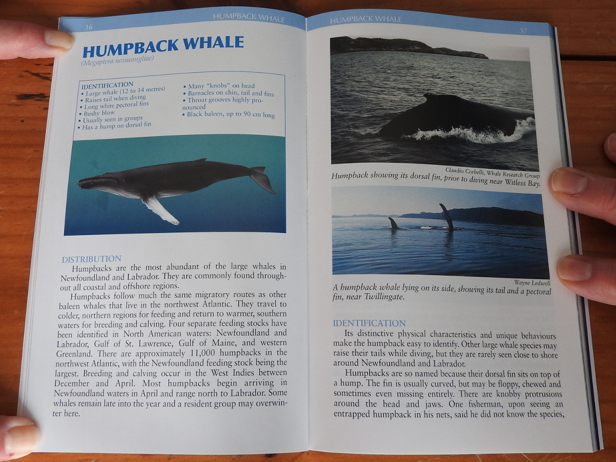 Humpback, Whales and Dolphins of Newfoundland and Labrador