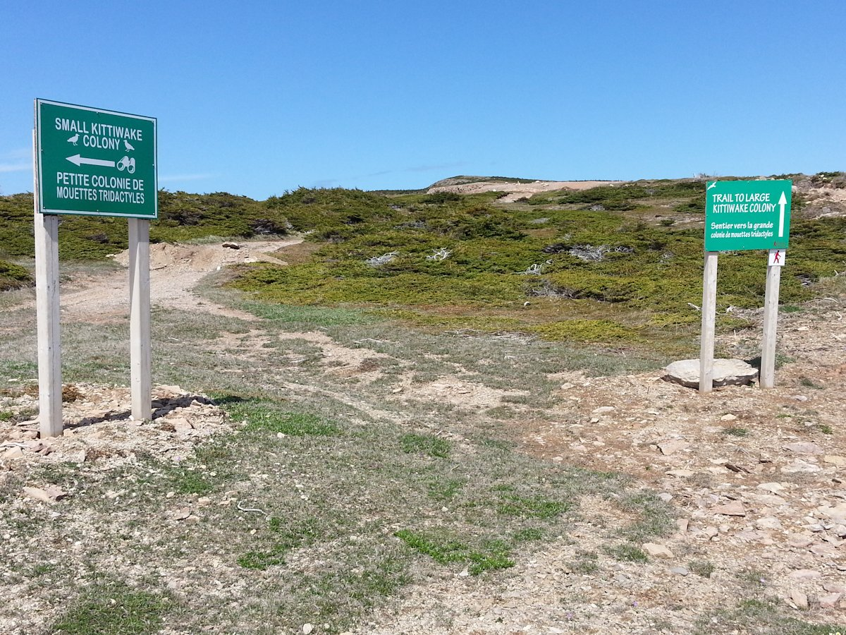 Trailheads to Kittiwake Colonies