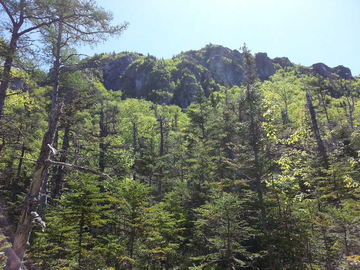 View of Erin Mountain from lower trail
